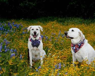Daisy and Lulubelle in flowers2